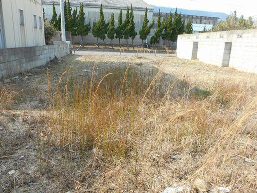 敷地内から西方向を撮影。